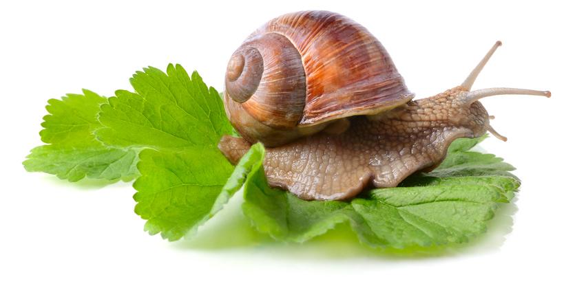 snail_a